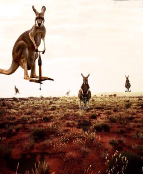 kangouroussauteurs.jpg